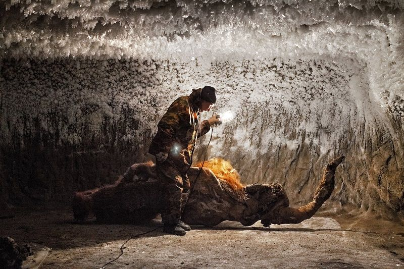 Залежи бивней мамонтов в Сибири