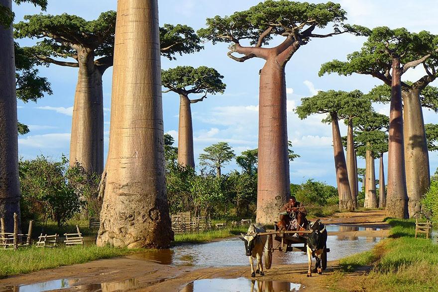 Самые великолепные деревья нашего мира