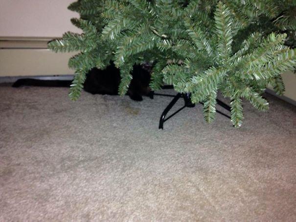 Коты, мастера маскировки