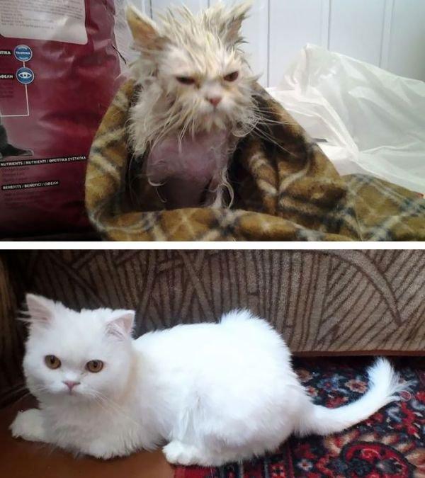 животных до и после