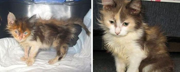 Коты до и после спасения