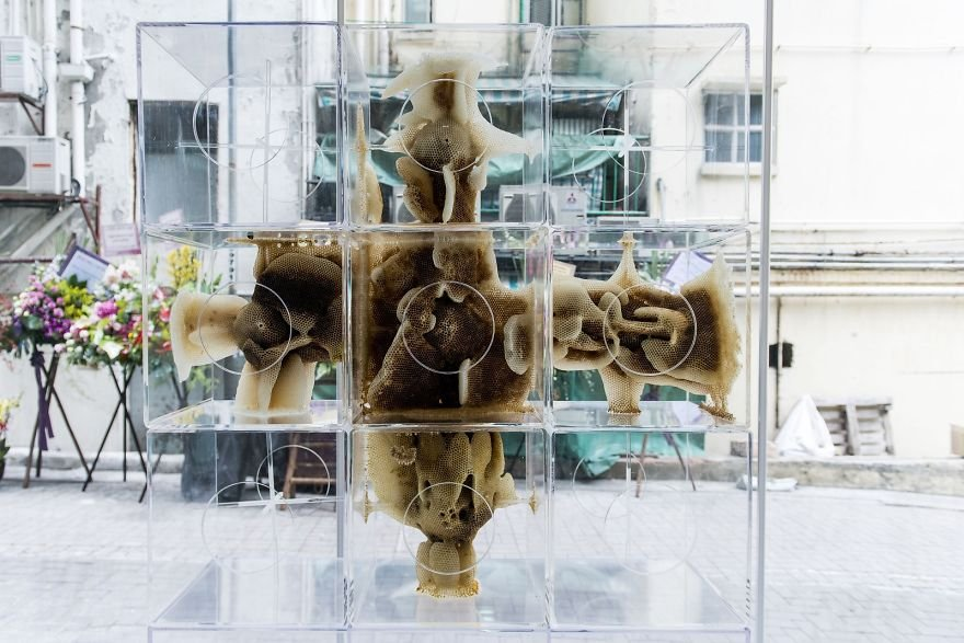 Произведения искусства от пчел и художника Рен Рай
