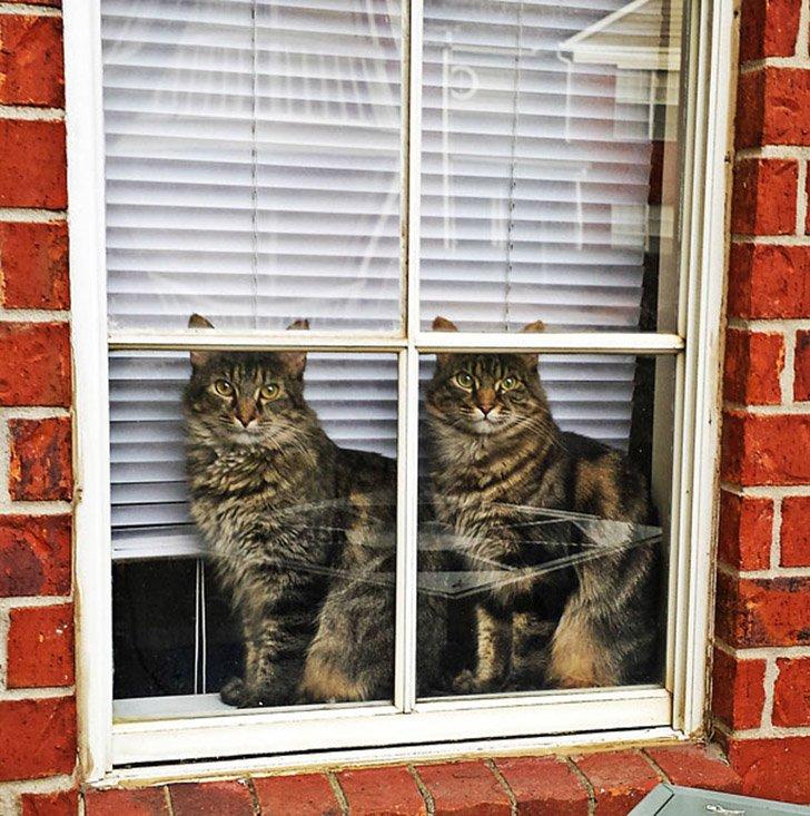 Коты, которые всё делают одновременно