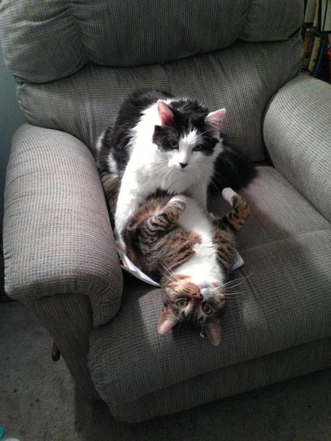 Домашние животные, застигнутые врасплох