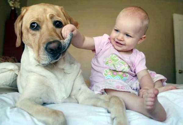 Терпеливость домашних животных