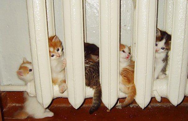 Домашние животные, которые выбирают теплые места