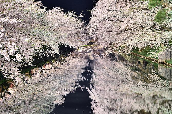 Цветущая весна в Аомори