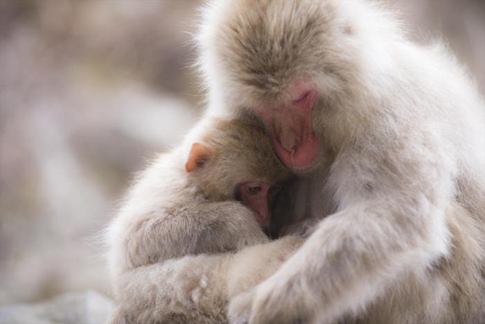 Животные тоже любят обнимашки
