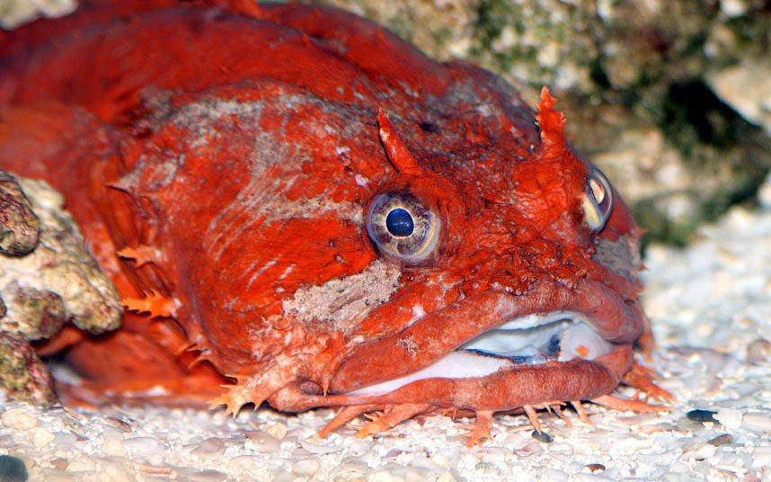 Очень страшные морские существа
