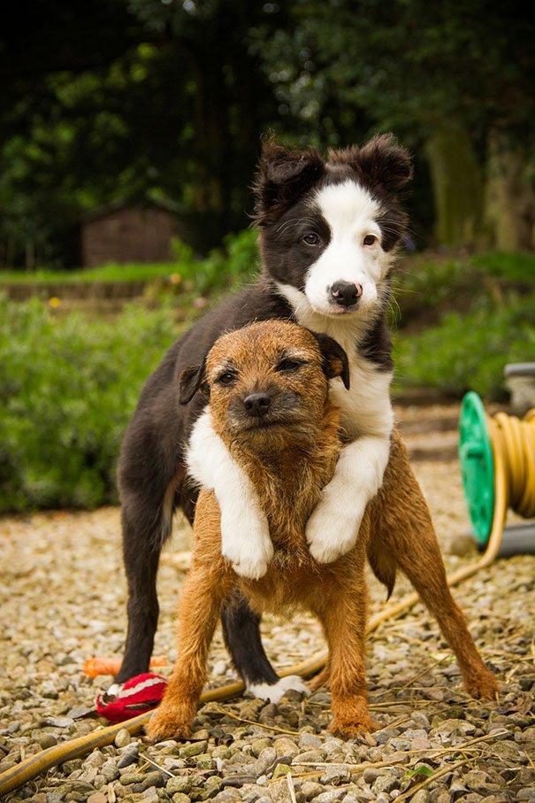Дружба собак на фото