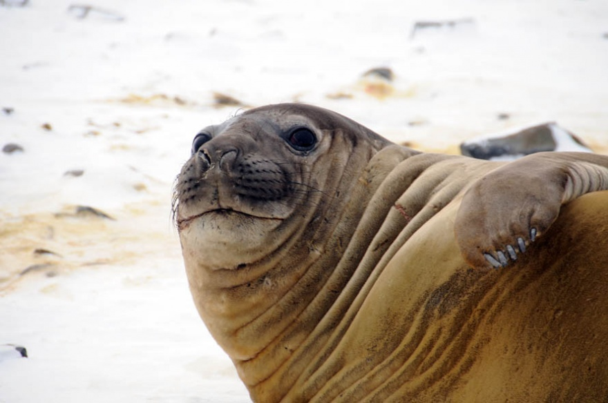 Интересные факты и способности животного мира