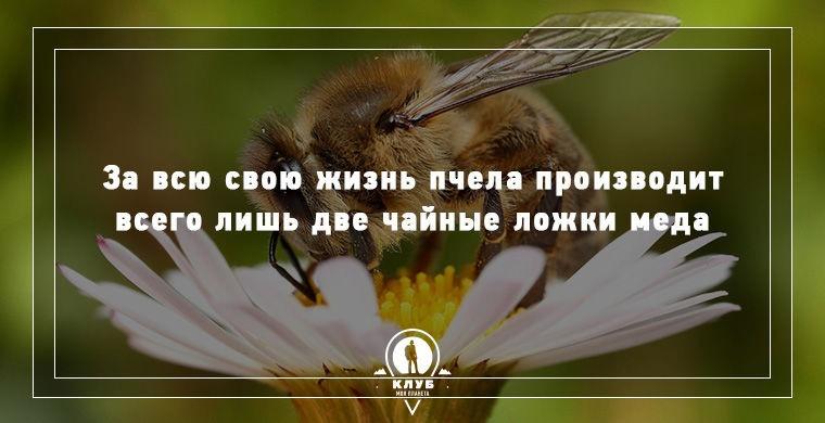 Картинки факты о живой природе