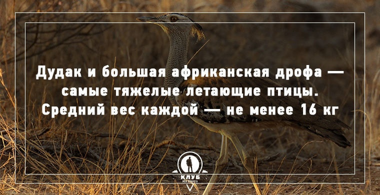 Интересные факты о живой природе