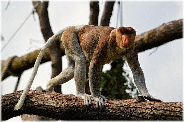 Странные механизмы защиты диких животных