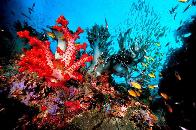 Interesantes respuestas a preguntas sobre arrecifes de coral.