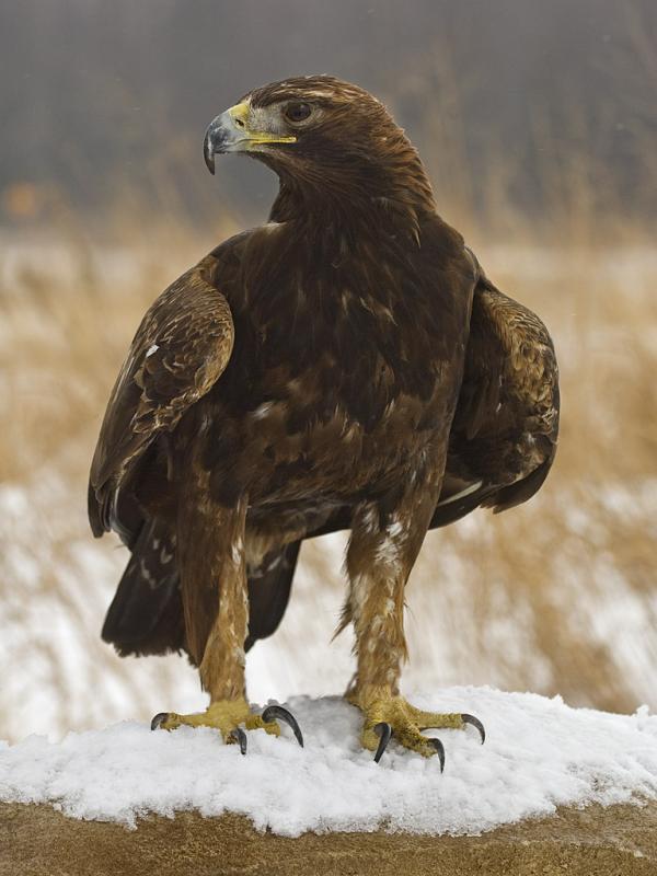 Порно фото хищных птиц