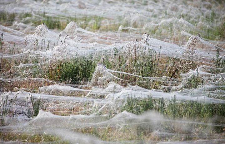 Массовые миграции пауков