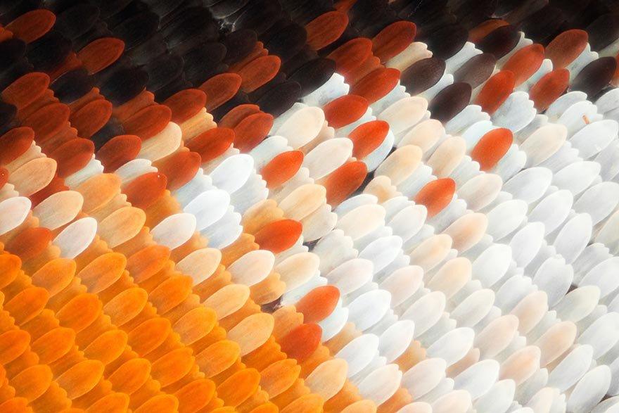 Крылья бабочек на макрофотографиях