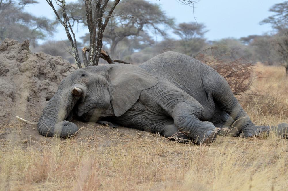 Интересные факты о сне животных