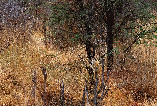 Исчезновение животных в фотопроекте Арта Вульфа