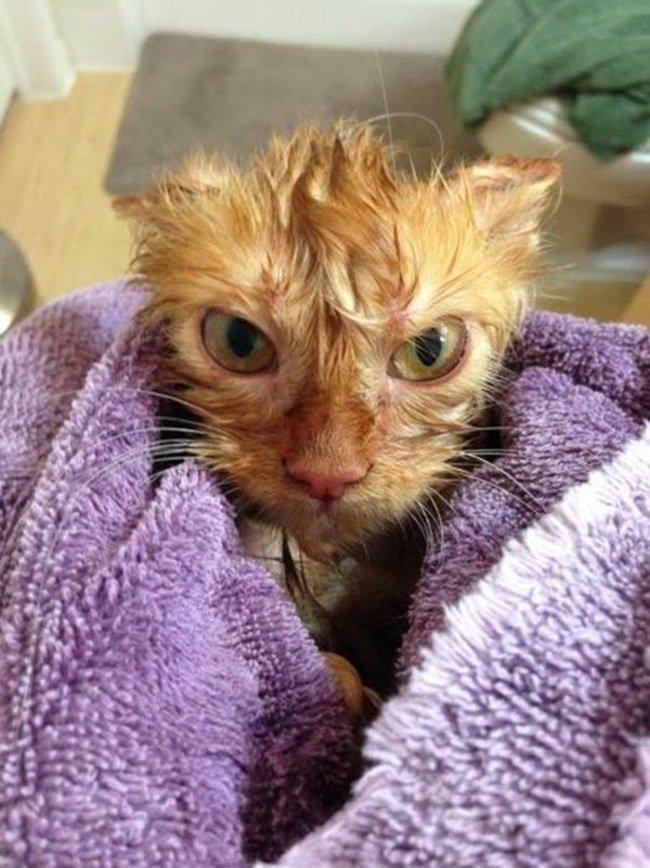 Коты, которые не любят купаться
