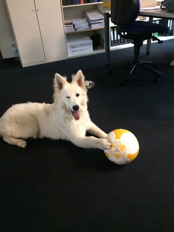 Собаки, которых взяли на работу
