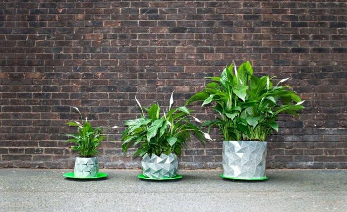 Горшки, которые растут вместе с растением
