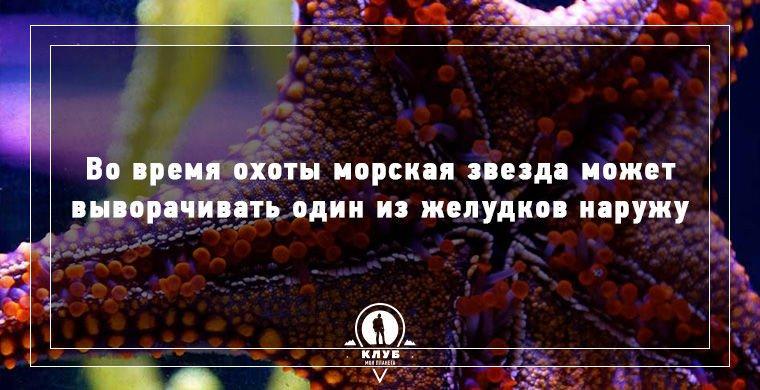 9 интересных фактов о морских обитателях