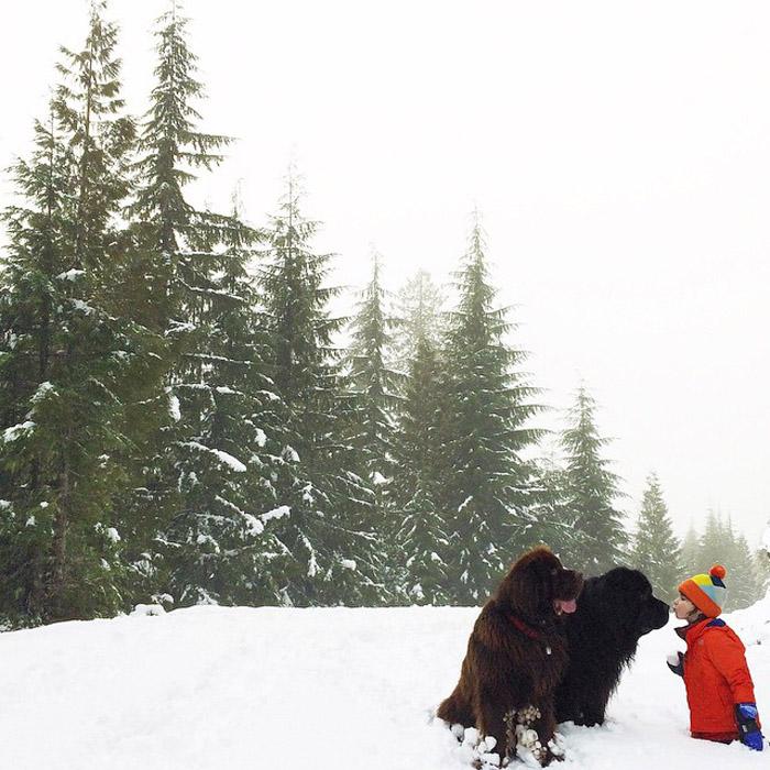 Дружба мальчика, двух огромных собак и лошади