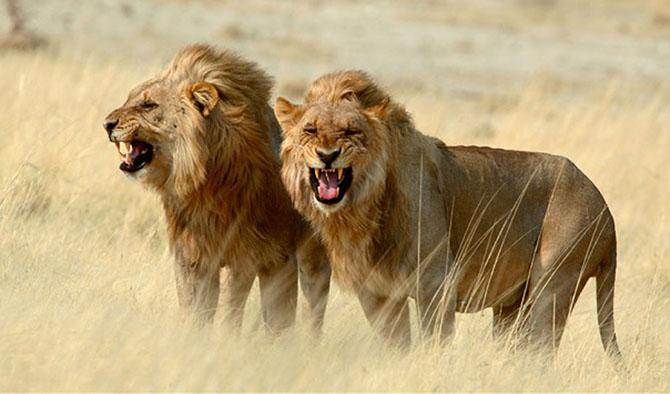 Самые смертоносные животные в мире