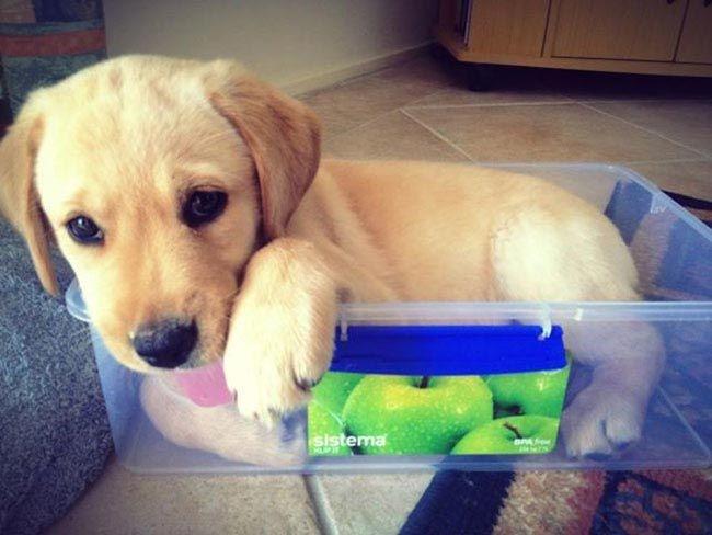 Собаки отдыхают на своих любимых местах