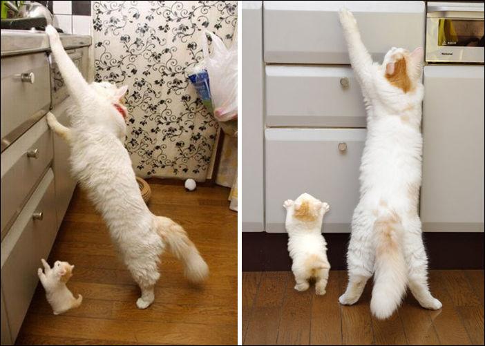Кошки и их миниатюрные копии