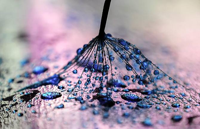 Макрофотографии капель воды от Ивелины Благоевой