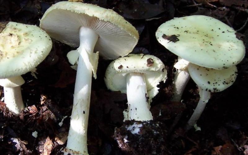 10 видов ядовитых грибов, которые растут в России