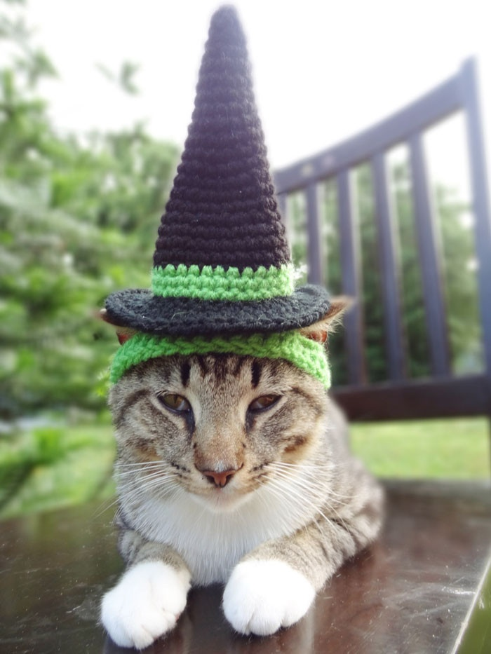Домашние животные в вязаных шапочках