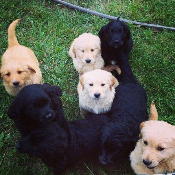 Неожиданные помеси собак