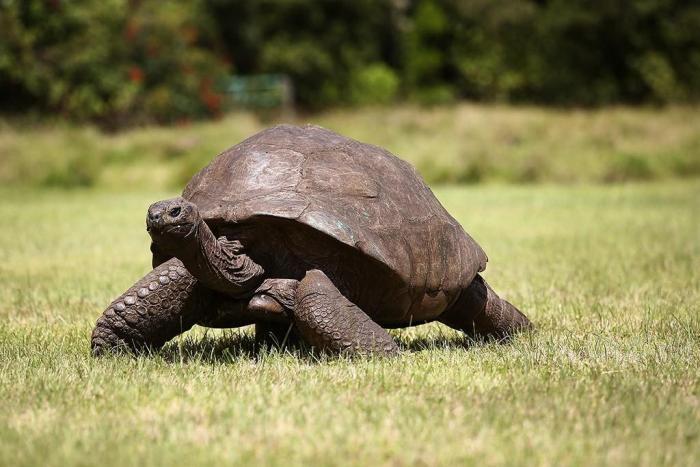 Долгожители нашей планеты из мира животных