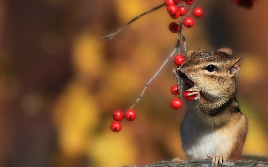 Животные анимация осень картинки