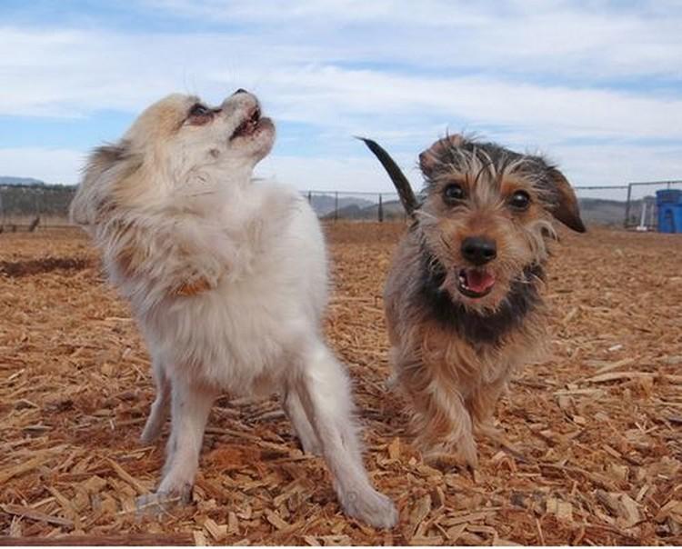 Фотографии собак от Труди Гарднер