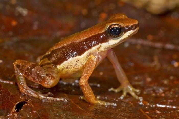 Новые виды флоры и фауны в джунглях Амазонки