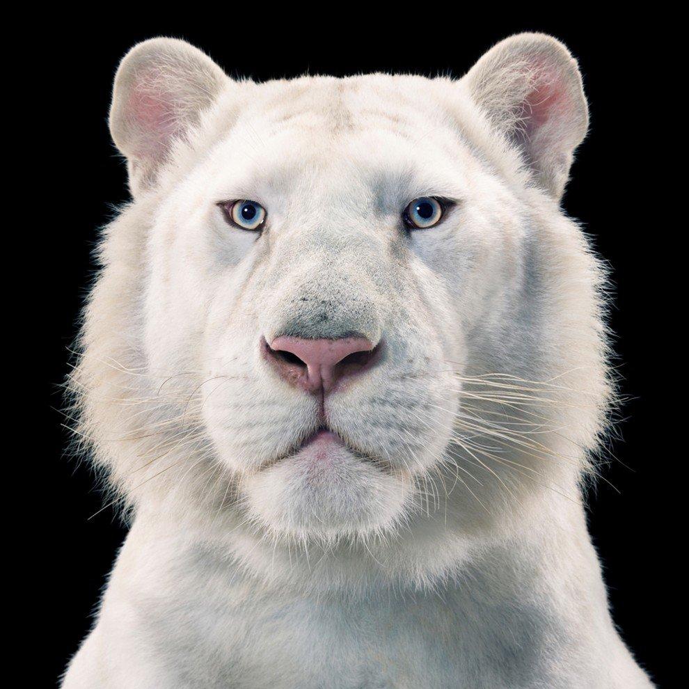 Портреты животных от Тима Флача