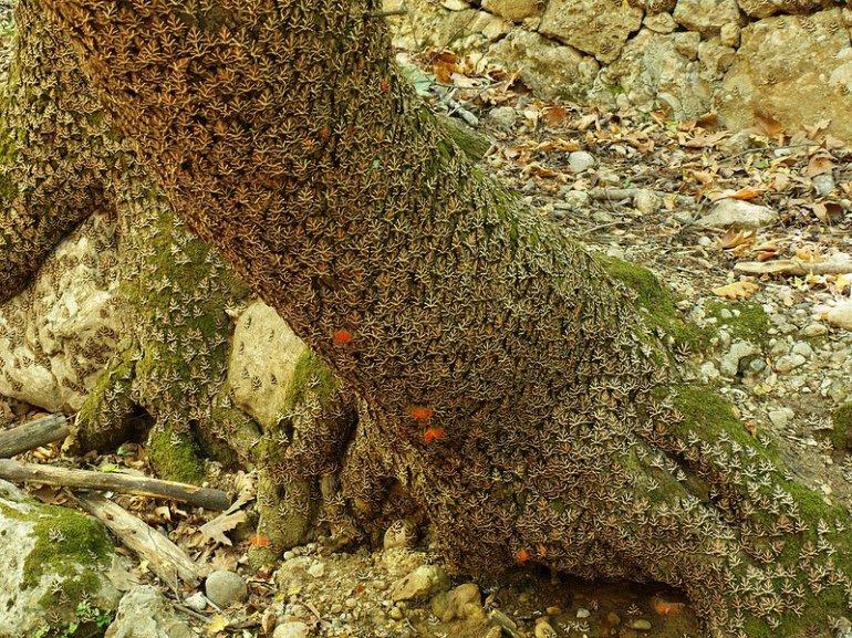 Долина бабочек в Греции