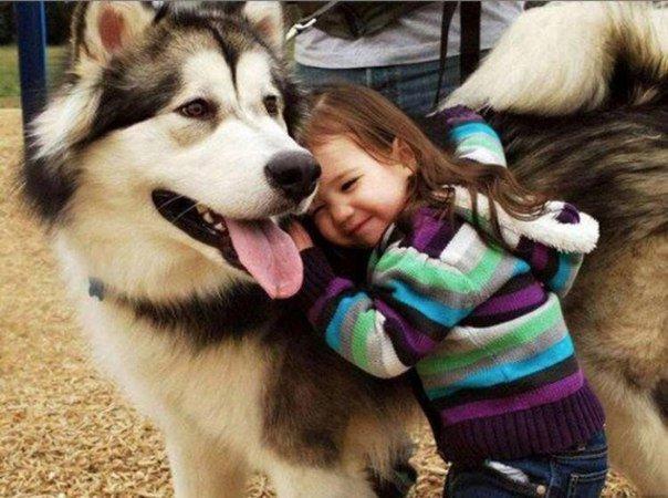 Домашние животные умеют присматривать за детьми
