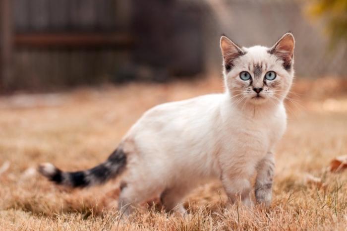 50 интересных фактов о котах