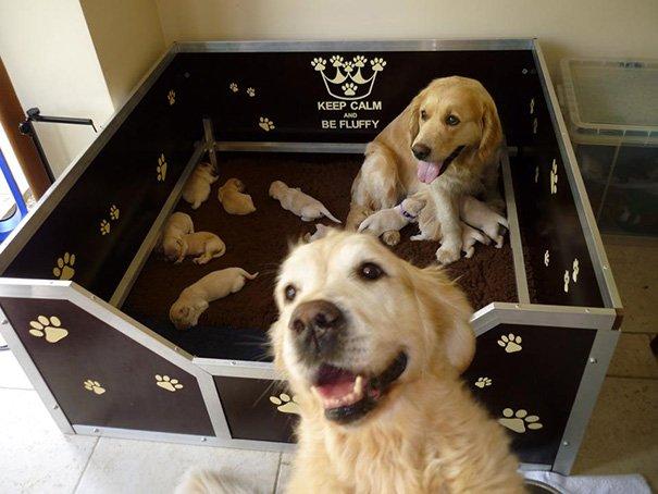 Милые мамы-собаки и их очаровательные щенята
