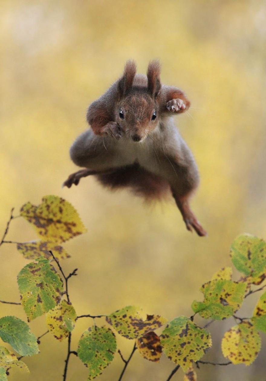 Конкурс самых смешных фотографий животных Comedy Wildlife Photography Awards 2015