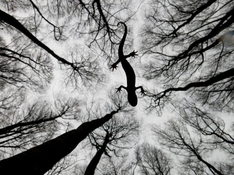 Победители фотоконкурса Wildlife Photographer of the Year