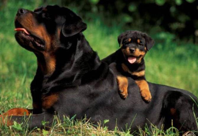 10 пород собак, которые отличаются особой преданностью