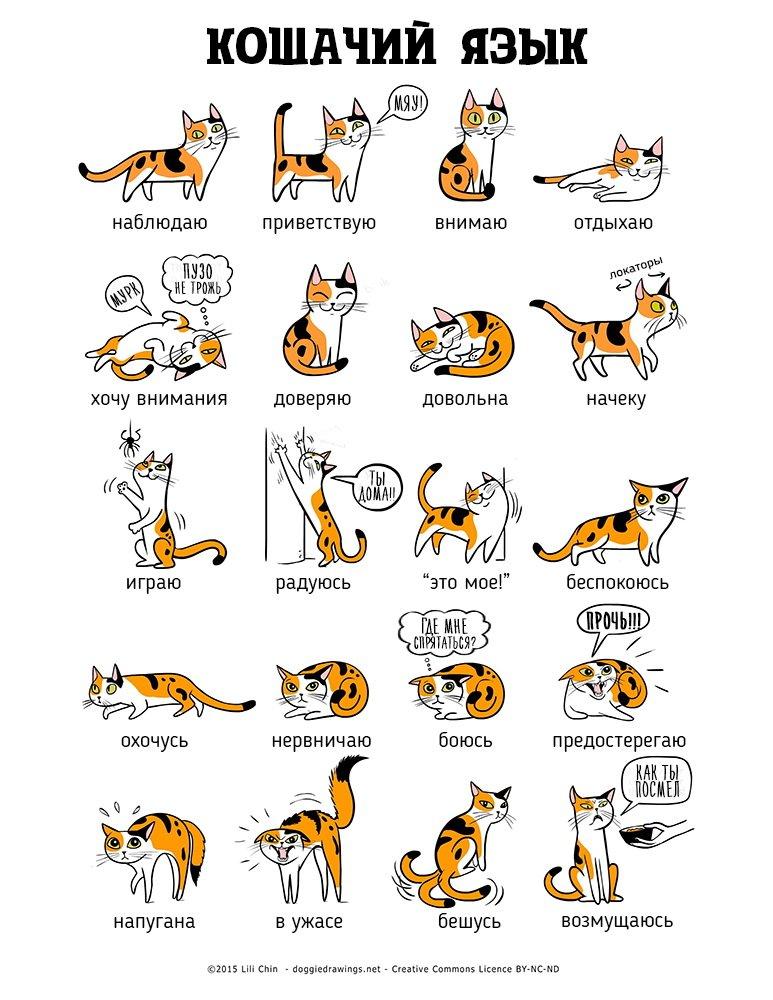 Язык тела кошек и собак на иллюстрациях Лили Чин