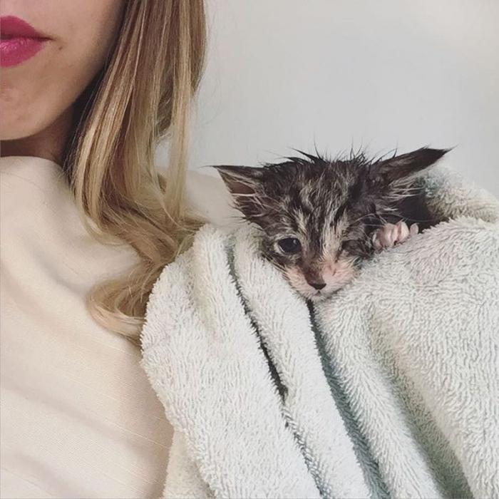 Девушка, которая спасает котят